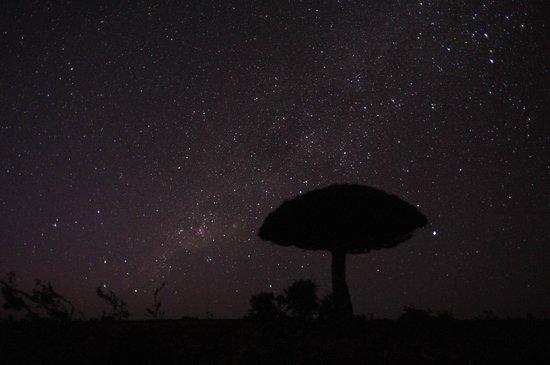 Socotra Island, Yemen: 天の川の下の竜血樹