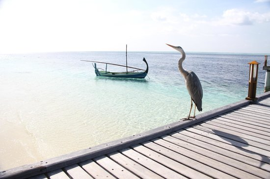 Vilamendhoo Island Resort & Spa: Jetty