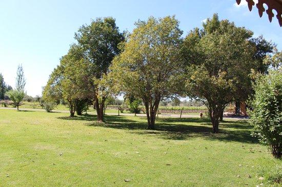 Posada Cavieres Wine Farm: Gardens