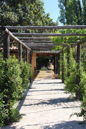 Posada Cavieres Wine Farm: The gardens & terrace