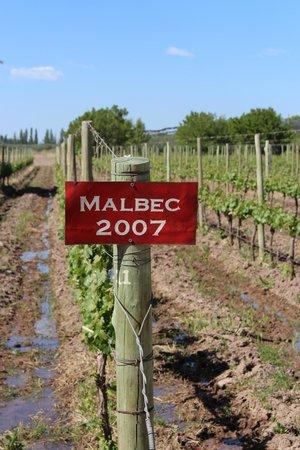 Posada Cavieres Wine Farm: Hans' wine