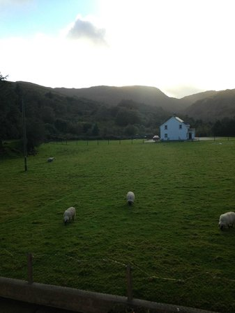 Gougane Barra Hotel: The sheep on the farm.