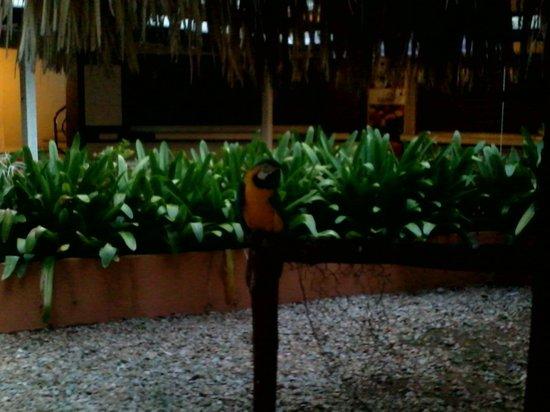 Marbellamar Hotel & Resort: la mascota del hotel, todo un espectaculo si te gustan las aves