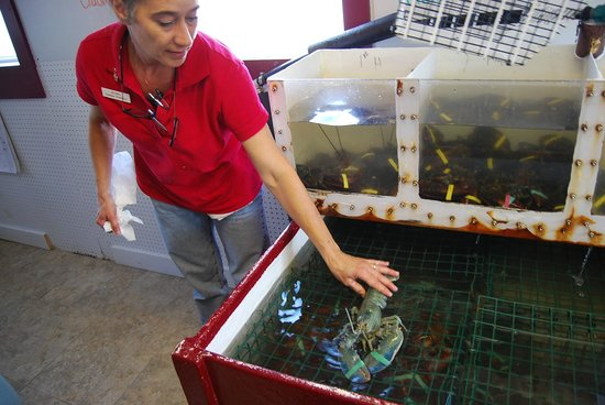 Broad Cove Marine Services: choosing the lobster