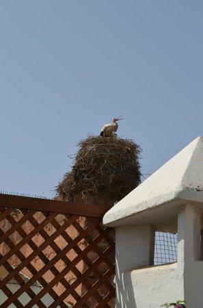 Riad Villa Harmonie: Аист