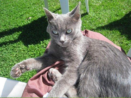 Agriturismo Nuragh'Elighe: Le chaton