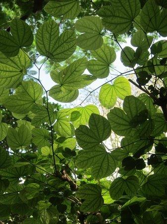 Ahilya Fort: Grape arbour near the pool