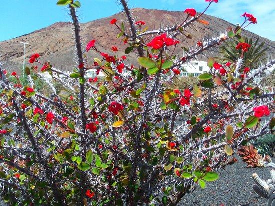 montana Roja au milieu des fleurs