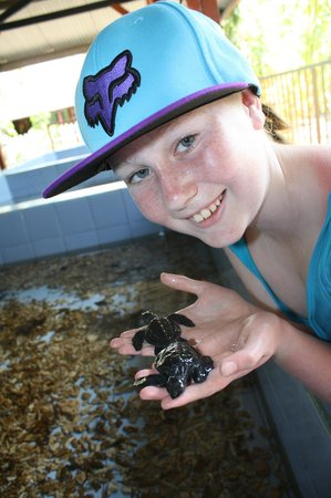 Turtle Conservation and Education Centre: Mika & the babies
