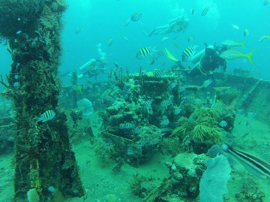 Dive St. Kitts: Part of the shipwreck and marine life.
