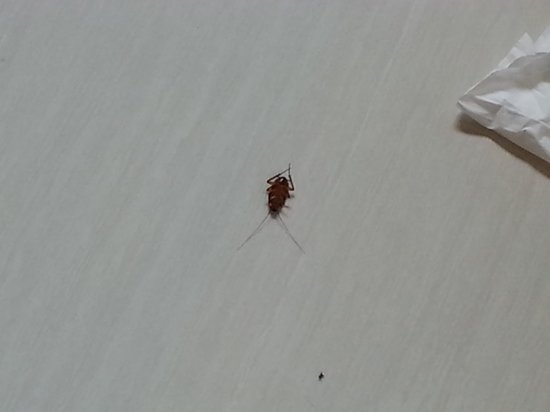 Nagoya Mansion Hotel & Residence: the room came with roaches on the floor. shocking for a new hotel