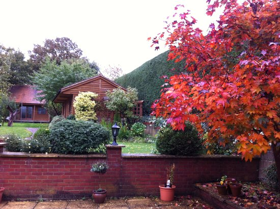 The Claddagh Guest House: Claddagh House garden with fall colors