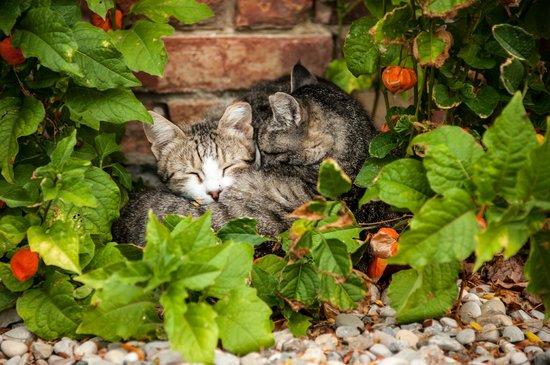 Agriturismo Il Rigo: Cats