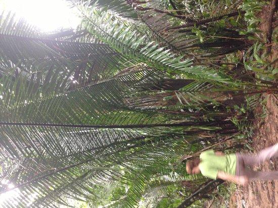 Cockscomb Basin Wildlife Preserve : Palm