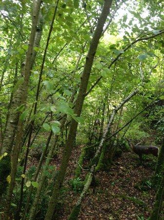 Roc de Cazelle : forêt