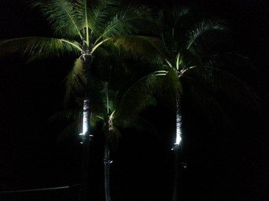 Ocean Pointe Suites at Key Largo: Palms at night