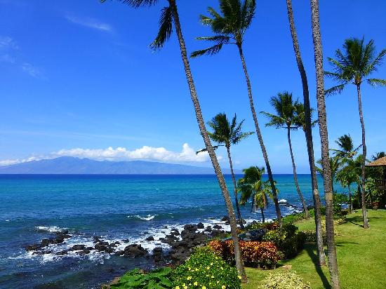 Mahina Surf: Watch the waves, turtles and whales...