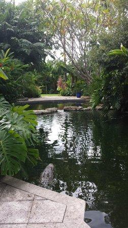 Sundy House: Freshwater pool