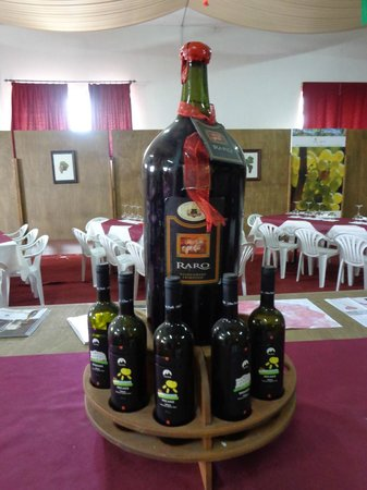 Cantina Albea winery and museum: Tasting room at Cantina Albea