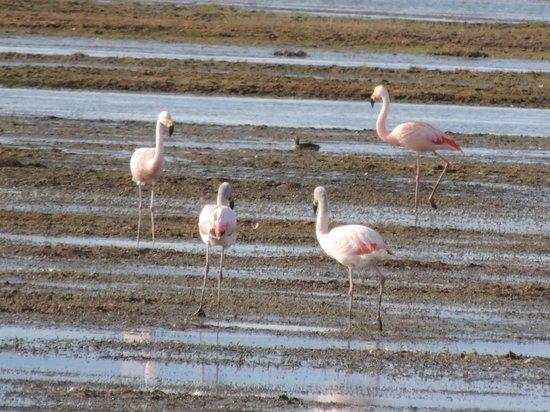 Lar Aike Hotel: Flamingos