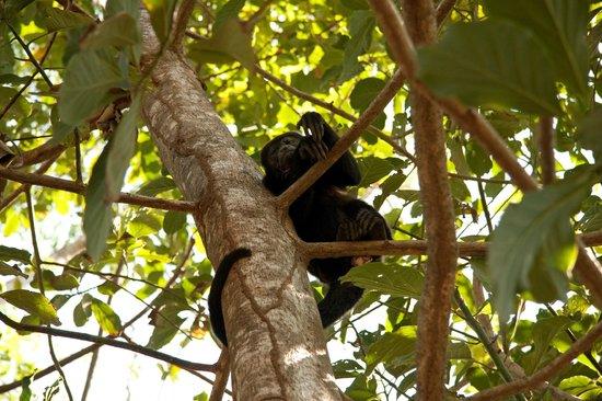 Pachamama Tropical Garden Lodge: Monkey