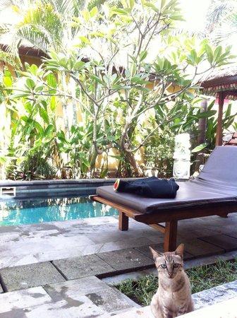 Tirtarum Villas, Canggu Bali: プライベートプールと猫ちゃん