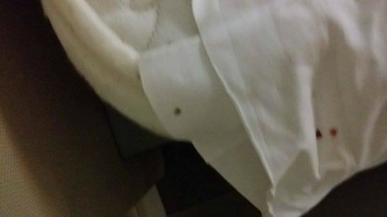 Best Western Hotel Roma Tor Vergata: blood stain from bugs