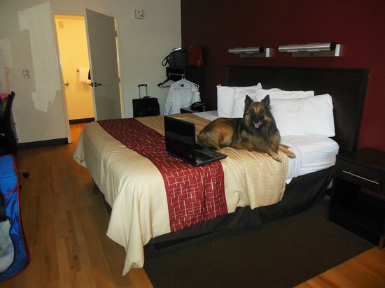 Red Roof PLUS+ West Springfield: Even my dog enjoyed his stay at the Red Roof Inn!