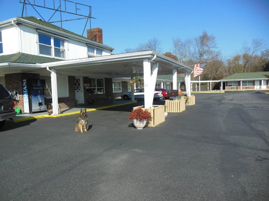 Moosup, CT: My dog outside the motel...