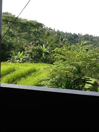 Bali Eco Stay Bungalows: View from Rice Water