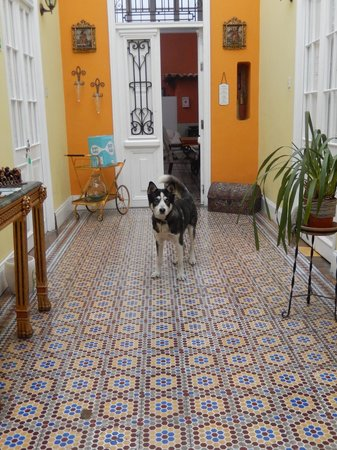 Residencial Miraflores B&B: Chicho loves to play ball