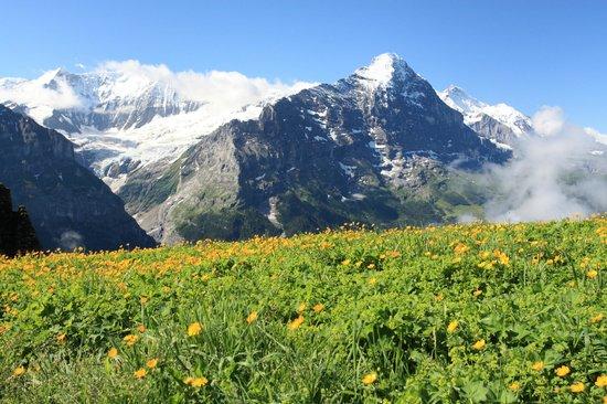 Grindelwald, Zwitserland: неподалеку от канатки