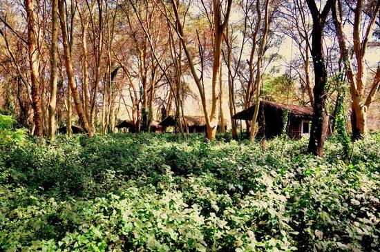 Migunga Tented Camp: Hotelgelände