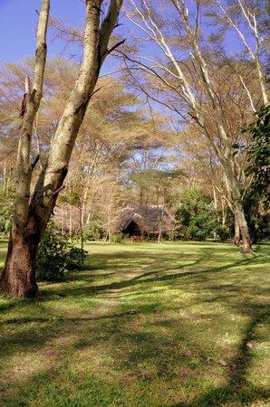 Migunga Tented Camp: Rezeption und Speisebereich