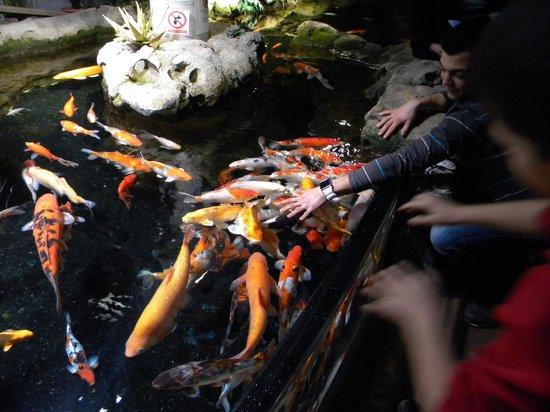Aquarium de Paris - CineAqua: Le bassin aux caresses
