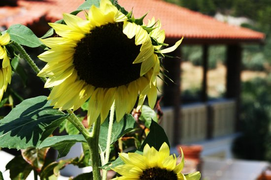 Vateri Guest House: always the sun!