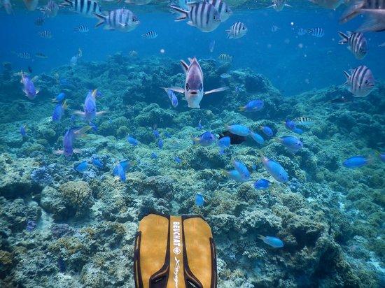 Four Seasons Resort Bora Bora: オプションで行ったシュノーケリングより