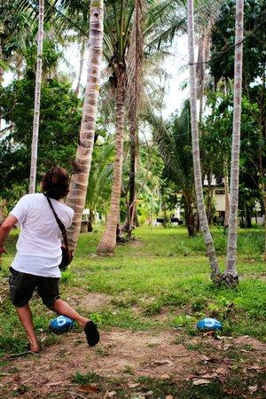 Samui Disc Golf: tight coconut lined fairways