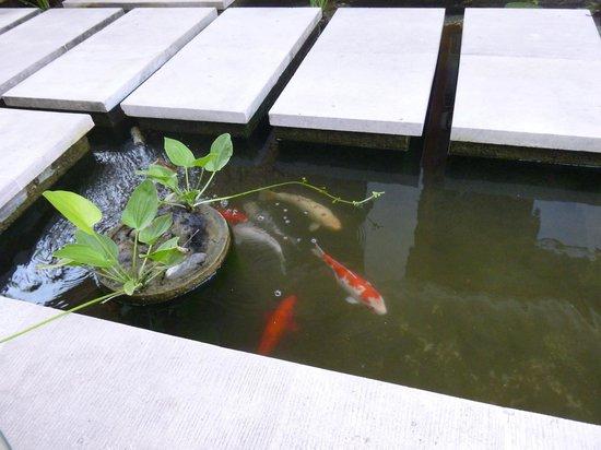 Karma Jimbaran: Koi pond in our villa