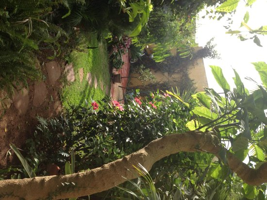 Dar Beldi : jardin