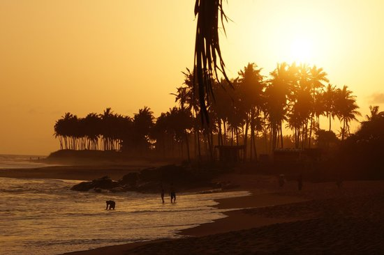 Coconut Grove Beach Resort: The beach