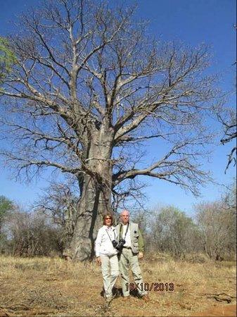 Elandela Private Game Reserve: enorme bao-bao