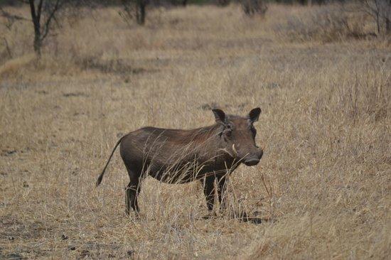 Tarangire Safari Lodge: tour safari