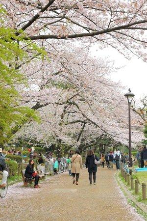 Sumida Park : 公園内