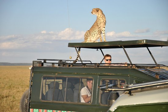 Thomas Tours & Safaris - Private Day Tours: Ghepardo - Masai Mara