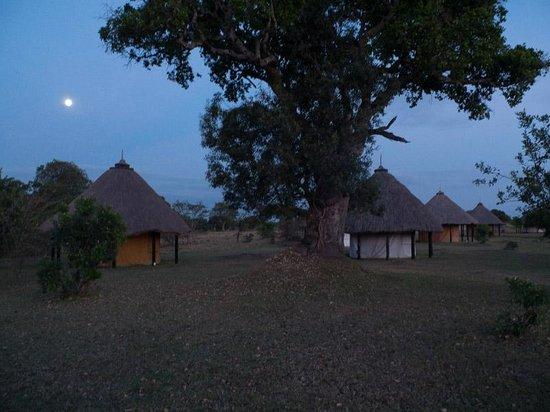 Mara West Camp : Les tentes
