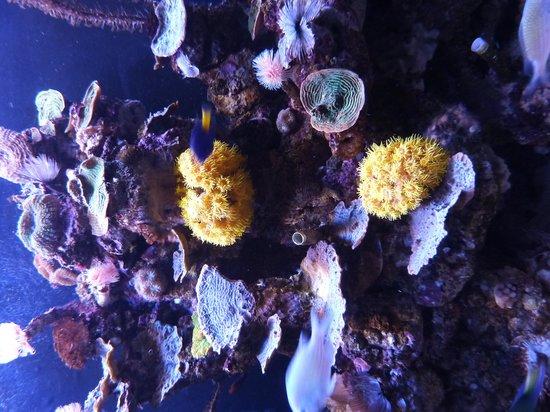 Java Hotel : Palma Aquarium