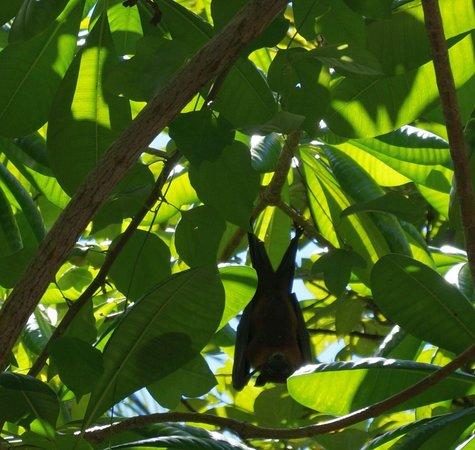 Sun Island Resort: Bat