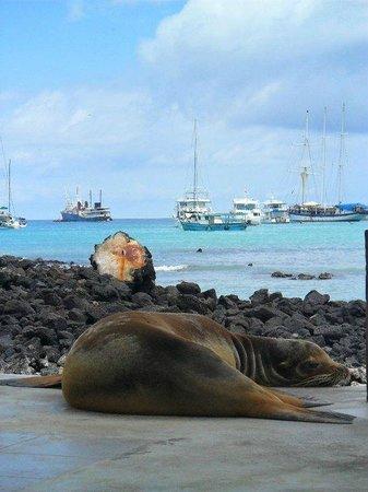Hotel Galapagos: Isabela