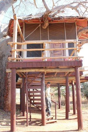 Tarangire Treetops : Tree house!!!